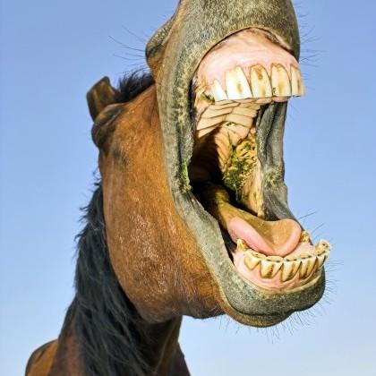 Paarden feest.jpg